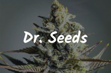 Dr. Seeds best canadian seed banks