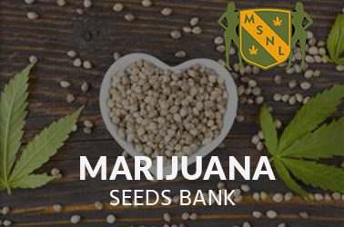 MSNL - Marijuana seeds bank