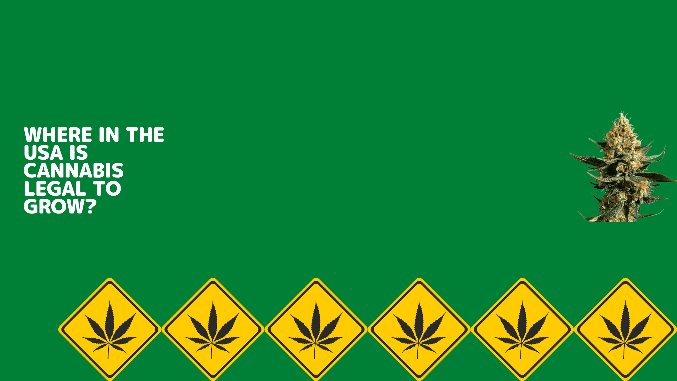 Where in the USA is Cannabis Legal to Grow?
