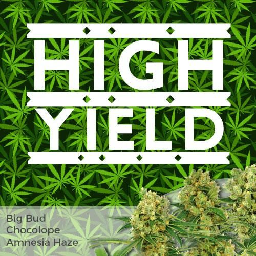 high yield mix seed pack